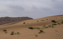 Badain Jaran Desert - Inner Mongolia - China (Rita Willaert) Tags: china cn landscape sand desert dunes lakes inner mongolia camels sanddunes mega herdsmen mongolian binnen innermongolia mongoli jaran zhangye badain binnenmongoli alxa badainjarandesert megadunes mongolianherdsmen