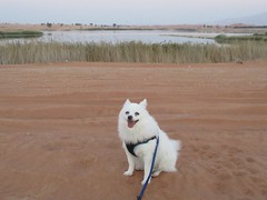 Rocket at Zakher Lake, Dec 2015 (Patrissimo2017) Tags: dog german alain spitz