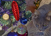 141228 scN 151217 © Théthi (thethi: pls read the 1st comment :-)) Tags: fête décoration sapin boule tradition chat namur wallonie belgique belgium noël noel setobjetsnew setnamurcity setvosfavorites provincenamur ruby15 bestof2014 setdecembre setfestivities fact60 faves70