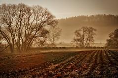 Feld in der Morgensonne (vivelasarre) Tags: morning nature field fog clouds forest sunrise landscape sony natur natura nebbia risingsun acker nex5r