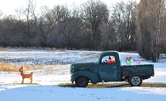 Mush! (Jeannette Greaves) Tags: snow truck antique manitoba dodge rudolph carman 2015 cmwdred