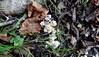 2015 Otaio (Miren Aizpuru) Tags: mountain bizkaia euskalherria vizcaya basquecountry paisvasco paisbasque mendia basquecoast onddoak ispaster otaio euskalkosta golfofbiscay