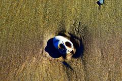 skull on the beach (fiddlefaddle_selene) Tags: face rock skull sand nightmarebeforechristmas