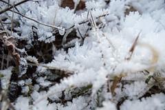 Ghiaccio (DarioMarulli) Tags: winter snow macro ice gelo foglie nikon frost natura neve inverno muschio freddo abruzzo laquila ghiaccio d3200 nikonclubit