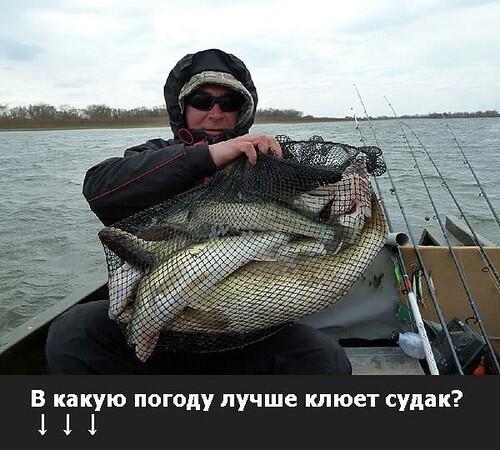 почему на оке не клюет рыба