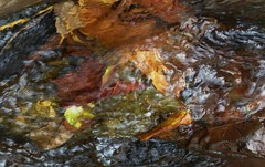 autumn stream (Edinburgh Nette ...) Tags: mull september16 lochbuie streams current movement reflections leaves water abstracts colour ribbet