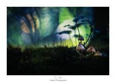Au pays des Schtroumpfs (Naska Photographie) Tags: naska photographie photo photographe paysage proxy proxyphoto macro macrophotographie macrophoto mushroom champs schtroumpfs extrieur champignon bokeh color couleur