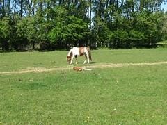 Near Brunnby (2009) (biketommy999) Tags: skne 2009 djur animal biketommy biketommy999