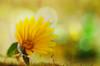 Handle With Care (hequebaeza) Tags: naturaleza nature vegetación vegetation flores flowers flora amarillo yellow contraluz backlighting nikon d5100 nikond5100 3570mm tubosdeextensión macro handlewithcare macromondays hequebaeza