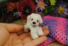 rex02 (Zhanna Zolotina) Tags: miniature dog ooak handmade toyzz tinydolhousetoyzz altair teddy bear dollhouse puppenhaus blythe