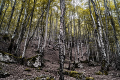 Reverie (Alessandro Tamburro) Tags: trees alberi bosco abruzzo bellabruzzo nature natura estate viaggi