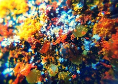 Spice (esala.kaluperuma) Tags: spice photograph esala kaluperuma chili coriander peper cloves turmeric cinnamon uk srilankan currypowder artistic abstract