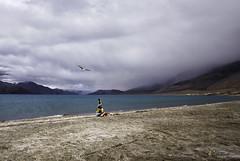 Welcome to Pangong (Dibyendu Das Photography) Tags: seagull spagmik pangong tso ladakh landscape travel