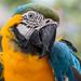 Macaw parrot snapshot