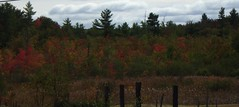 Our Neighboring Colby's Marsh, 9/30/2016 - IMGP6457 (catchesthelight) Tags: trees fall foliage fallfoliage leaves colorchange marsh marshmaples nh autumncolors autumn