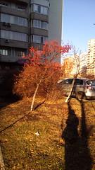 260/365 Rowanberry (zinushana) Tags: projectlife project project365 rowan shadow sun light  365