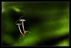 champignon 08 (jo.pensel) Tags: champignon mushroom france forêt bois sousbois contre mycologie bretagne brittany nature naturebretagne macrophotographie macro jocelynpensel jopensel