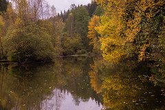 Herbstwald (susanne.wagnerpanda) Tags: weiher herbst landschaft