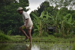 Le dtail (rmyrichard1) Tags: trees arbre courbe reflection water balineseworkers landscape rizire workmoment green working ubud ricefield bali work