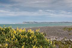 IMG_5349 (roseyposey2009) Tags: napier westshore beacons beach port westshorebeaconsbeach