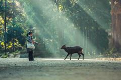 (igu3) Tags: japan nara deer