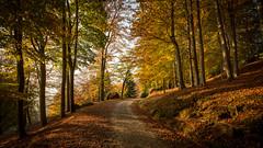 Burcina Autumn 2016