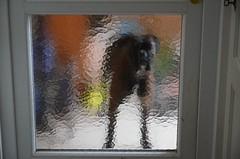 Karvased külalised (anuwintschalek) Tags: nikond7000 d7k 18140vr austria niederösterreich wienerneustadt kodu home koer hund dog boxer bokser sügis autumn herbst november 2016 kuno quno