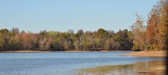 Lake Barkley Shoreline_0040 (Porch Dog) Tags: 2016 garywhittington nikond7000 nikon18300mm kentucky november lbl betweentherivers landbetweenthelakes nature scenic cumbelandriver