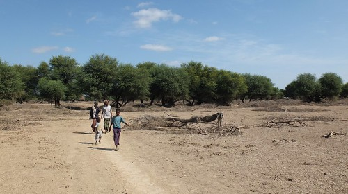 Djibouti_2014 - Forêt d'Andaba