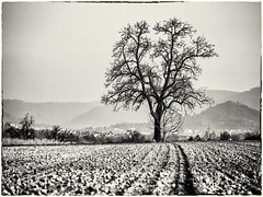 A Place for Hibernation... (Ody on the mount) Tags: anlsse bume felder fototour pflanzen schwbischealb bw monochrome sw