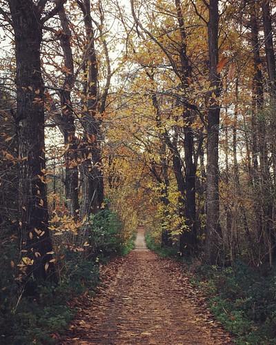#belgium #wijnendale #wood