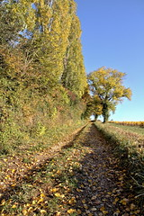 Sentier tranquille (Chemose) Tags: sentier tranquille path quiet feuille leaf berzélaville bourgogne burgundy southburgundy bourgognedusud saôneetloire mâconnais france canon eos 7d hdr octobre october automne autumn