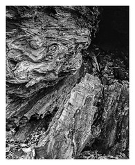 wood texture in B&W (TAC.Photography) Tags: rottedwood treetrunk textured artisticphotography tacphotography