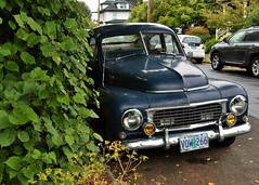 Sheepish, Sleepy Swede (rickele) Tags: oregon portland volvo classiccar pv444