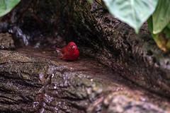 TESTING SONY A7ii (cgambarrotti) Tags: bird beercan butterflyworld minoltaaf70210mmf4 sonya7ii