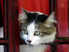 3/6 Ahh!!! A friend appears ... (Raul Jaso) Tags: windows cats window cat ventana chats gatos finestra ventanas gato gata felinos felino fz finestre gatas leschats fz150 panasonicfzseries panasonicfz150 rauljaso rauljasofotografia rauljasophotography