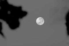 untitled (carlospxf) Tags: blancoynegro monochrome mono noiretblanc monochromatic pb minimal blacknwhite pretoebranco bnw blackandwhitephotography bnwsociety bnwlover bnwcaptures bnwmood bnwgallery bnwmoods