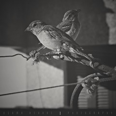 Opposite! (osama_2012_ashraf) Tags: blackandwhite bw birds opposite quarrel