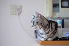 ちんまり (catfish.boogie) Tags: japan cat sapporo hokkaido xe2 xf35mmf14r