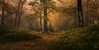 Dun Dubh (GenerationX) Tags: autumn trees mist leaves landscape scotland unitedkingdom scottish neil gb prints trossachs spiderwebs barr aberfoyle thenarrows lochard queenelizabethforestpark achrayforest canon6d laraich dondubh