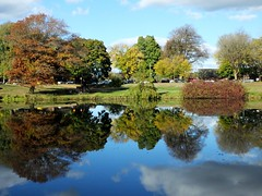 Lake Sacajawea Fall Reflection (BriarCraft) Tags: cloud reflection day293 day293365 365the2015edition 3652015 20oct15