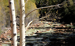 06 Durango CO to Silverton CO - Durango & Silverton Narrow Gauge Railroad  32 (Aspen and river scene) (Johns Never Home) Tags: colorado silverton aspen durango steamtrains durangosilvertonnarrowgaugerailroad