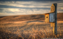 Morning Bird House (westrock-bob) Tags: morning copyright canada canon fence eos dawn nest birdhouse ab alberta barbedwire weathered agriculture daybreak 6d cuthill canon6d reddeercounty canoneos6d nestinghouse bobcuthillphotographygmailcom bobcuthill bobcuthillphotography
