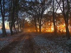 Nachmittagssonne - afternoon sun (Sophia-Fatima) Tags: valluhn gallin mecklenburgvorpommern deutschland weg way wald forest