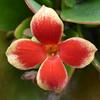 Μετεωρα Ελλαδα P1150277 (omirou56) Tags: flower macro hellas 11 greece floralfantasy ελλαδα φυση λουλουδι πορτοκαλι ελλασ φωσ μετεωρα φθινοπωρο panasoniclumixdmctz40