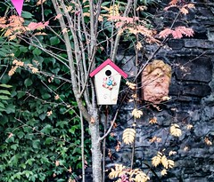 LITTLE BIRDHOUSE IN GRANGEGORMAN [CANON EF 100-400 L IS LENS MOUNTED ON SONY ILCE-A7RM2]-110028