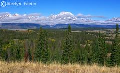 Grand Teton National Park-9-19-15 (17) (moelynphotos) Tags: nationalpark snowcapped wyoming grandtetonnationalpark moelynphotos