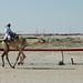 doha camel race (32)
