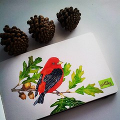 #bird #redbird #moleskine #watercolours #scarlet #artistoninstagram #artjournal #acorn #animalcreatives #art_antonio #arts_mag #art_spotlight #art_we_inspire #waterblog #nawden #winsorandnewton #arts_help (Milagritos9) Tags: square oak lofi squareformat acuarelas redbird birdportrait iphoneography birdjournal instagramapp uploaded:by=instagram moleskinewatercolours acornpainting retratopajarito