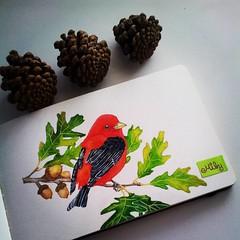 #bird #redbird #moleskine #watercolours #scarlet #artistoninstagram #artjournal #acorn #animalcreatives #art_antonio #arts_mag #art_spotlight #art_we_inspire #waterblog #nawden #winsorandnewton #arts_help (Milagritos9) Tags: square oak lofi squareformat acuarelas redbird birdportrait iphoneography birdjournal instagramapp uploaded:by=instagram moleskinewatercolours acornpainting retratopajarito